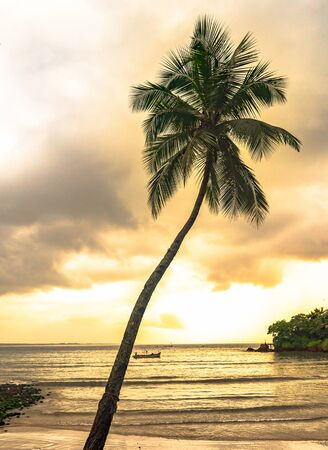 Beautiful Evening scene at tropical beach vacation, with tilted Coconut tree in the foreground and sunset in the background giving sky a magical tint. Focus on Coconut Tree Leaves. _ Image.