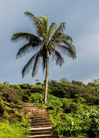 Coconut tree on some elevation from one of the exotic beaches of Goa. It is situated in western ghats of India which is considered by UNESCO as the hottest ecological hot spots.