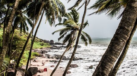 natural beach of goa in monsoon season with slightly tilted palm and coconut trees and high tidal waves, making the sea shore milky white.