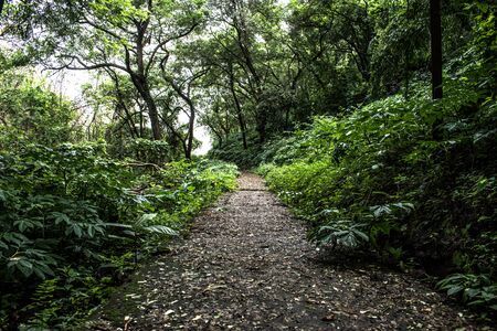 Offroad walking trail through a thick dense tropical rain forest of western ghats in goa region of India. Declared as one of the hottest biodiversity hot spot Imagens