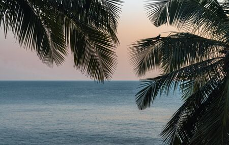 Beautiful Landscape during sunset comprising Palm Trees and the colorful sunset sky with visible horizon and the calm Arabian sea. Looks like a view from the isolated island or from sea view apartment