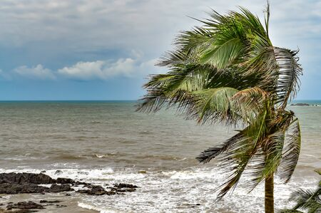 Palm tree leaves rustling in cyclonic winds in rough monsoon season with white clouds in blue sky and clear horizon,  a picturesque view from the window side of sea view apartment