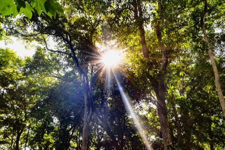 Amazing bright sunny day in reserved forest area, where bright sun rays are peeping through the leaves and branches of tall trees. Plants make use of this untapped solar energy for photosynthesis. Imagens - 144239974