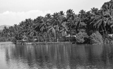Very Beautiful Black & White Photo of a Tropical natural stream of freshwater lake/river/lagoon/backwaters with a number of Palm Trees dropping its reflection in the water stream, along the coastline. Imagens