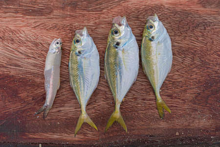 Beautiful culinary photo of fresh catch fishes kept side by side on wooden background and are ready to cook. Fishes are rich in protein and these small ones will be cooked as snack with full course