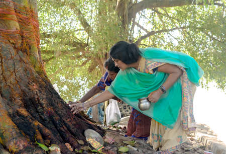 Authentic imagery of middle aged Indian women worshipping tree after tying it with holy red thread and taking blessings from it as they take part in century old rituals of praying to holy Peepal tree.