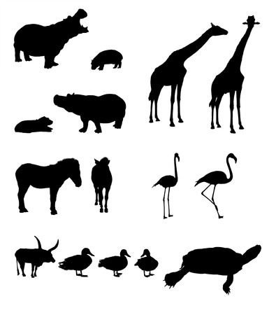 Collage of masked african animals in front of white background Stock Photo - 17183749