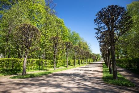 kuskovo: The park of Kuskovo