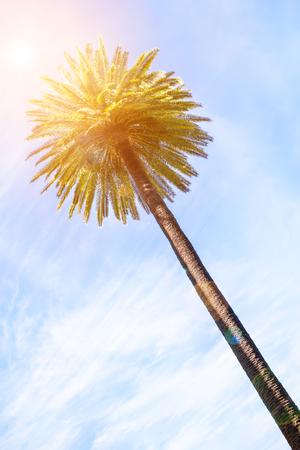 Palm met hemel en zon achtergrond