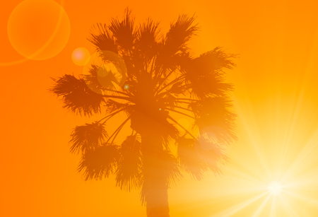 Silhouette of the palm tree on the orange background with sun Фото со стока