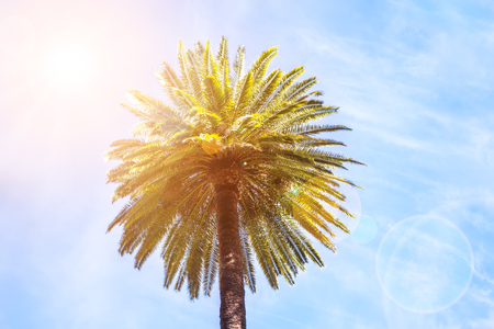 Palm with sky and sun background