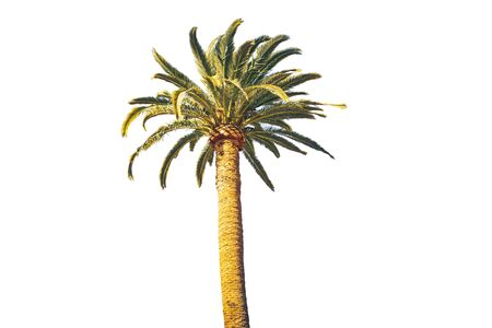 Isolated green palm on the white background