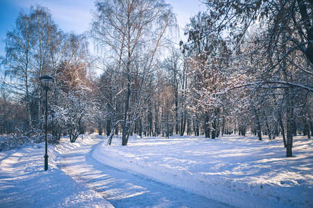 """Sunny day in park """"Future garden"""" at winter in Moscow, Russia Imagens"""