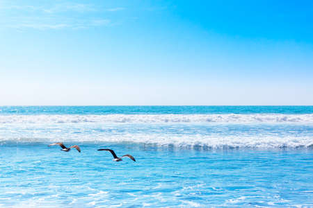 Beautiful waves of the pacific ocean with flying seaguls Фото со стока