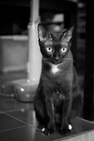 blackwhite: cat in black&white