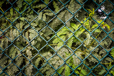 mesh fence: Closeup of the steel mesh fence with green plant background Stock Photo