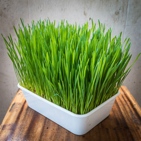 wood table: Closeup of the wheatgrass in plastic pot on the wood table