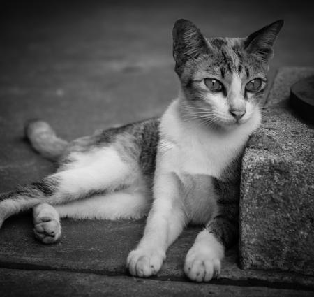 cutie: Closeup of the blackwhite cutie small kitten background