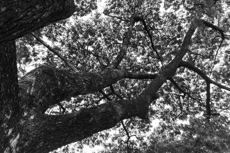 monotone: Closeup of the monotone under the tree background Stock Photo