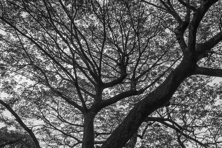 monotone: Closeup of the monotone   under the tree background