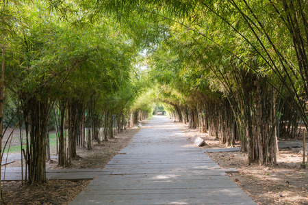 Closeup of the passage way with bamboo background Stock Photo