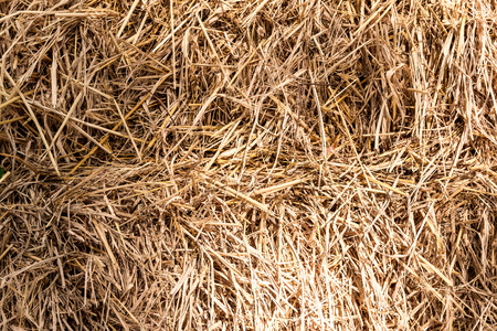 chaff: Closeup of the chaff  in the paddy background Stock Photo