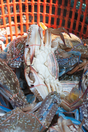 blue swimmer crab: Fresh blue crabs in a basket at the seafood market