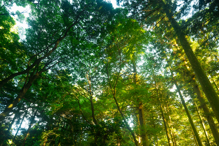 magnificence: Light shining through the trees in forest