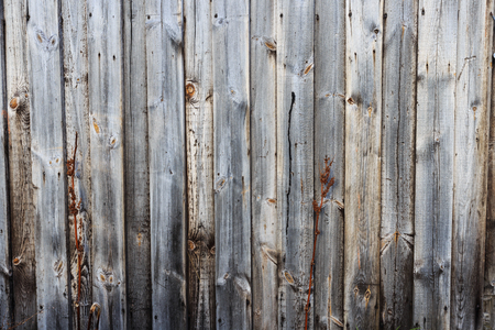 hard stuff: Beautiful attractive Consists of a dry tree Based at the bottom of a wooden background.