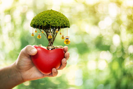Women hands hold a red heart and gold coin inside and money gold bag of tree as destinations put on the top in the public park, Saving money for buy health insurance to the loved ones concept. Imagens