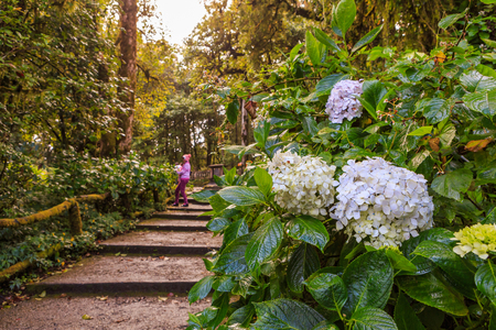 tropical evergreen forest: Flower in forest and tourist