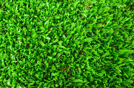green grass plant background