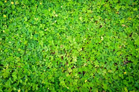 green brazils beans backgrounds