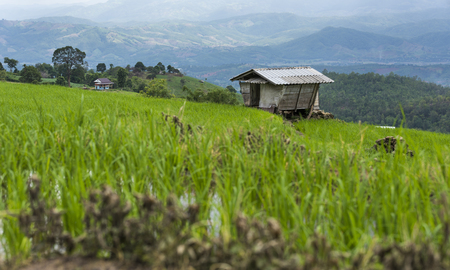 Cottage on step rices field at mountains in Chiangmai province,Thailand Zdjęcie Seryjne