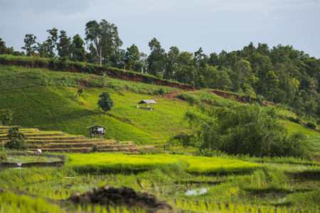 cottage in step rice's fields at Chiangmai province,Thailand
