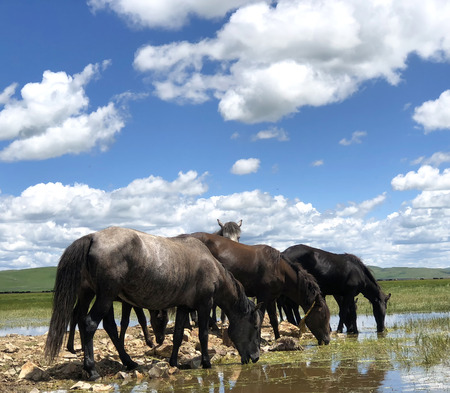 The horse stands beside the lake mountin scenary blue sky reflection on the water