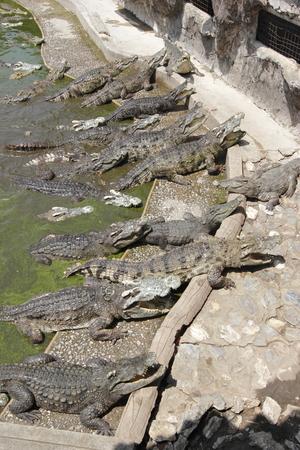 samutprakarn: Crocodile Farm in Samutprakarn