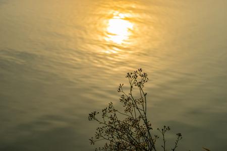 reflect: Wild Grass flower in Sunset reflect
