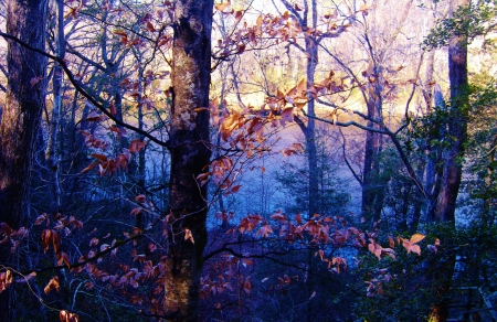 Cape Fear River through the forest at Raven Rock State Park
