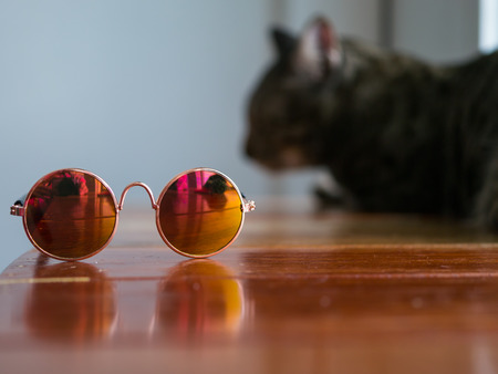 Mini Sunglasses for pet and bored cat face in background