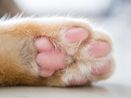 close-up white and pink cat's feet