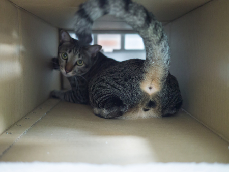 Tabby cat and its butt in paper brown box