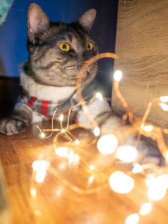 black cat and strip Christmas light