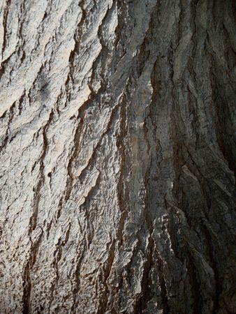 rough: Rough tree bark