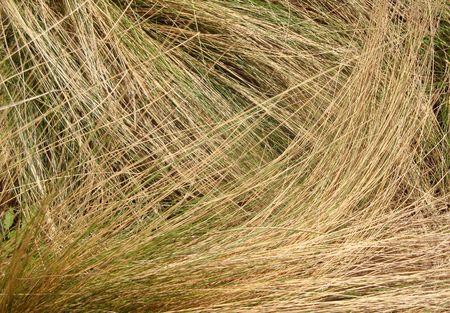 Swirl of Grass Blades