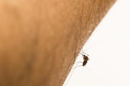mosquito on human skin Stock Photo - 17225337