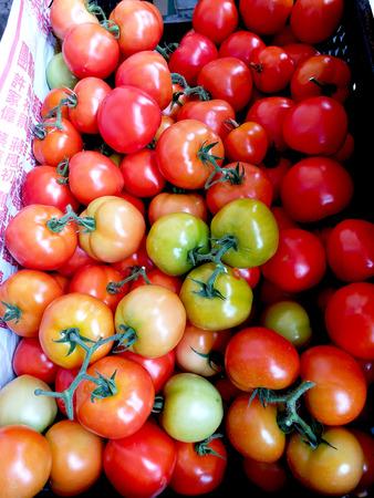 Harvest the tomato to market