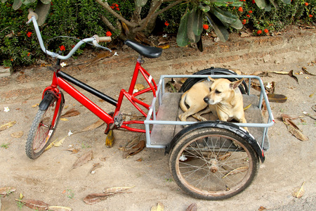 The dog be ready to tour by bicycle and waiting for the driver