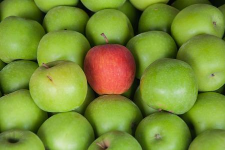 manzana roja: Una manzana roja en verde manzana Foto de archivo