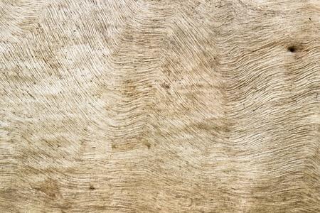 wood tuxture